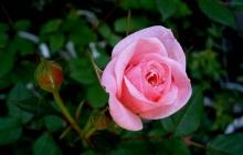 flower_ii_bd-720x